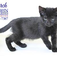 Domestic Shorthair Kitten for adoption in Laplace, Louisiana - Church