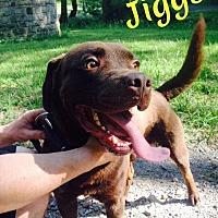 Adopt A Pet :: Jiggs - Fayetteville, WV