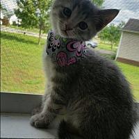 Adopt A Pet :: Stormie - Homewood, AL