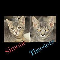 Adopt A Pet :: Simone170982 - Atlanta, GA