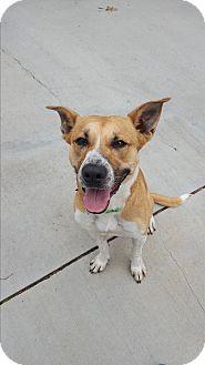 Shepherd (Unknown Type) Mix Dog for adoption in Naperville, Illinois - Trixie