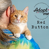 Adopt A Pet :: Red Buttons - Pearland, TX