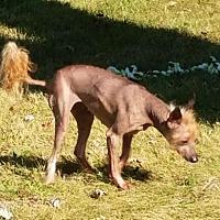 Adopt A Pet :: Bella - Akron, OH