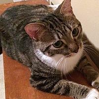 Adopt A Pet :: Fiona17 - Youngsville, NC