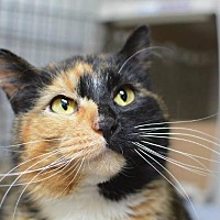 Adopt A Pet :: JEWEL - Newaygo, MI