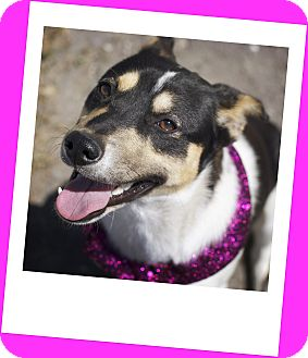 Rat Terrier Mix Dog for adoption in Corpus Christi, Texas - Ruby