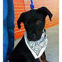 Adopt A Pet :: Fred - Louisville, KY