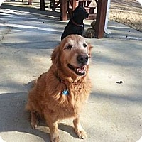 Adopt A Pet :: Baylee - Foster, RI
