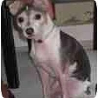 Adopt A Pet :: Missy Foster - Jacksonville, FL