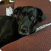 Adopt A Pet :: Thor - Hamilton, ON