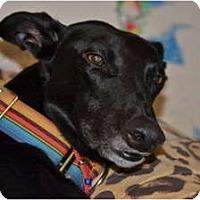 Adopt A Pet :: Joey - Windsor Heights, WV