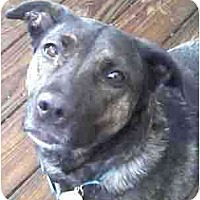 Adopt A Pet :: Jackie - Forest Hills, NY