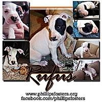 Adopt A Pet :: Rufus - Colleyville, TX