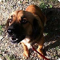 Adopt A Pet :: Patrillo - Maysel, WV