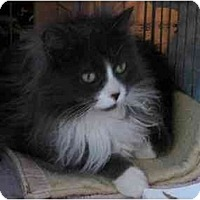 Adopt A Pet :: Fluffy - Westfield, MA