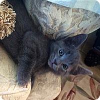 Adopt A Pet :: Spike - Bradenton, FL