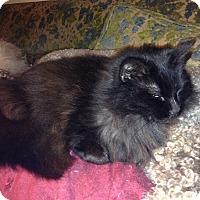 Adopt A Pet :: Evelyn - Santa Rosa, CA
