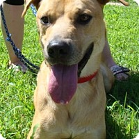 Adopt A Pet :: George - Rosalia, KS