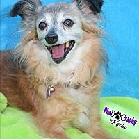 Adopt A Pet :: Chantal - Wellington, FL