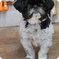 Adopt A Pet :: T-Gars - Rigaud, QC