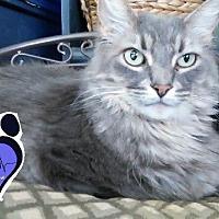 Adopt A Pet :: Nubbins - Huntsville, AL