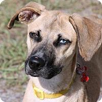 Adopt A Pet :: Florence - Loxahatchee, FL