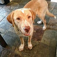 Adopt A Pet :: Walden - Westminster, MD
