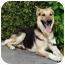 Photo 1 - German Shepherd Dog Mix Dog for adoption in Los Angeles, California - Maximilliam von Magdeburg