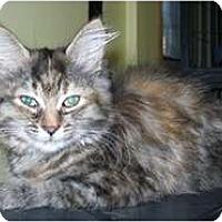 Adopt A Pet :: Chuckles - Shelton, WA