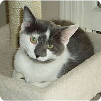 Adopt A Pet :: Chrissy - Westfield, MA