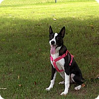 Adopt A Pet :: Luther - Conway, AR