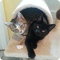 Adopt A Pet :: Goblin - Raritan, NJ