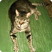 Adopt A Pet :: Mr Magoo - brewerton, NY