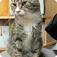 Adopt A Pet :: Shiloh - Norwich, NY