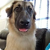 Adopt A Pet :: Francisco - Freeport, ME