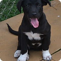 Adopt A Pet :: Reese - Manchester, NH