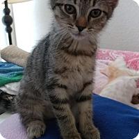 Adopt A Pet :: Faleesa - Scottsdale, AZ