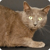 Adopt A Pet :: Berry - Newland, NC