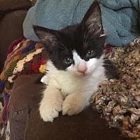 Adopt A Pet :: Rey - Chandler, AZ