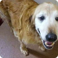 Adopt A Pet :: Oro - Denver, CO