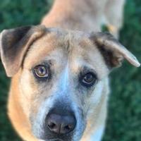 Adopt A Pet :: Parkay - Memphis, TN