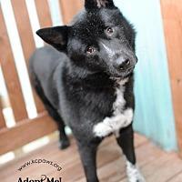 Adopt A Pet :: Gemma - Liberty, MO