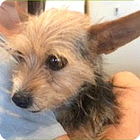 Adopt A Pet :: Jazzy - Boulder, CO