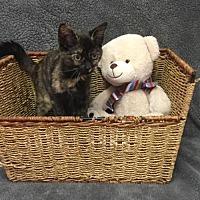 Adopt A Pet :: April - Martinsburg, WV