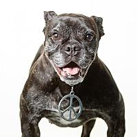 Adopt A Pet :: Kimber - St. Louis Park, MN