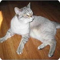 Adopt A Pet :: Lucky - Markham, ON