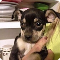 Adopt A Pet :: Michelle - Chandler, AZ