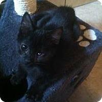 Adopt A Pet :: Pumpkin - Lakewood, CA