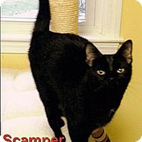 Adopt A Pet :: Scamper - Medway, MA