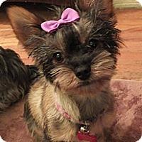 Adopt A Pet :: Misty - Los Angeles, CA